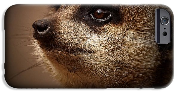 Meerkat 6 IPhone Case by Ernie Echols