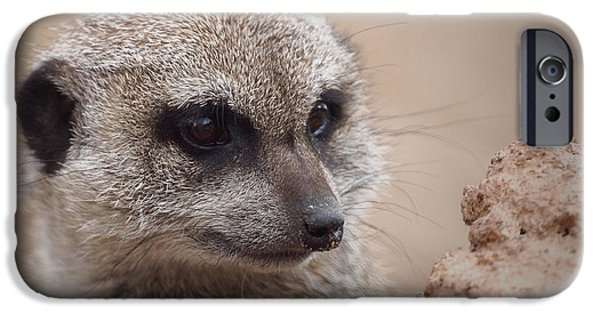 Meerkat 7 IPhone Case by Ernie Echols