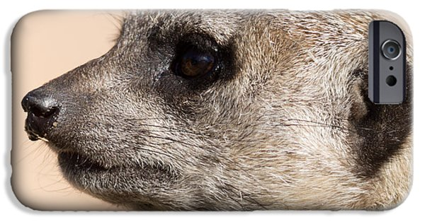 Meerkat Mug Shot IPhone Case by Ernie Echols