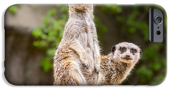 Meerkat Pair IPhone Case by Jamie Pham