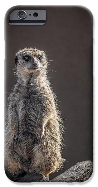 Meerkat Sentinel IPhone Case by Ernie Echols