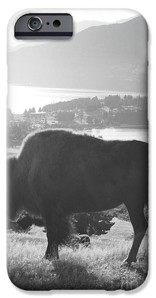 Mountain Wildlife IPhone Case by Pixel  Chimp