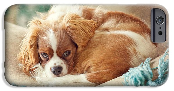 Napping Puppy IPhone Case by Kay Pickens