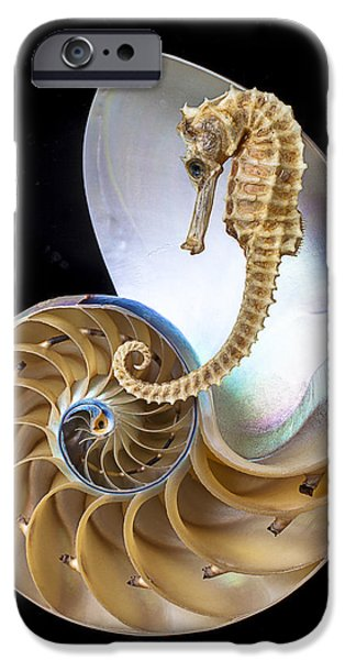 Nautilus With Seahorse IPhone 6s Case by Garry Gay