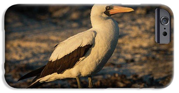 Nazca Booby (sula Granti IPhone 6s Case by Pete Oxford