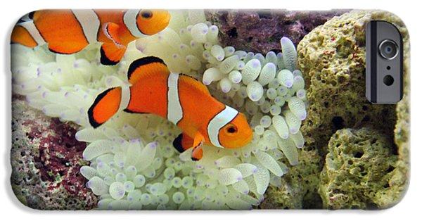 Nemo IPhone Case by Carey Chen