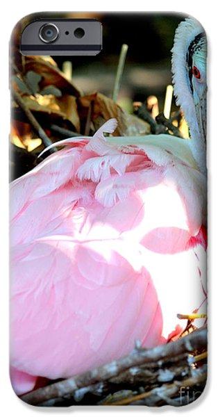 Nesting Spoonbill IPhone Case by Carol Groenen