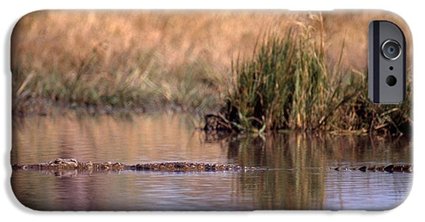 Nile Crocodile IPhone 6s Case by Gregory G. Dimijian, M.D.