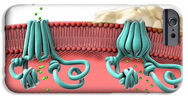 Normal And Abnormal Cftr Proteins IPhone Case by Gunilla Elam