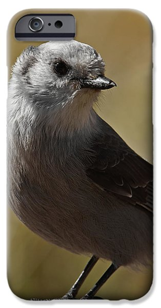Northern Mockingbird IPhone 6s Case by Ernie Echols