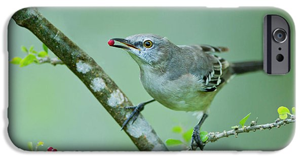 Northern Mockingbird (mimus Polyglottos IPhone 6s Case by Larry Ditto