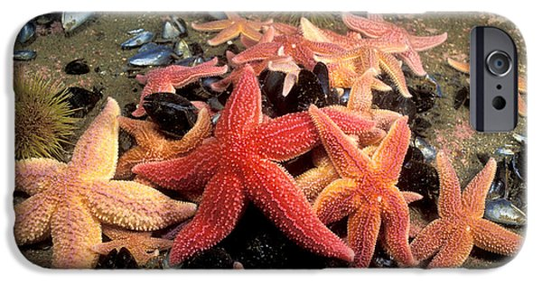Northern Sea Stars IPhone Case by Andrew J. Martinez