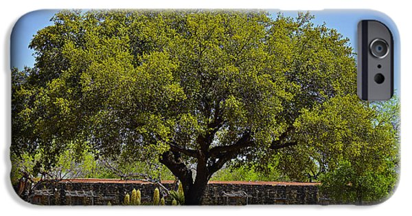 Oak Tree Mission San Jose Tx IPhone Case by Christine Till
