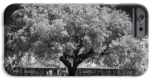 Old Oak Tree Mission San Jose IPhone Case by Christine Till