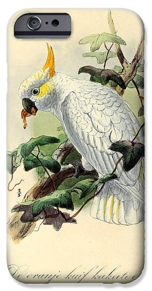 Orange Cockatoo IPhone 6s Case by J G Keulemans