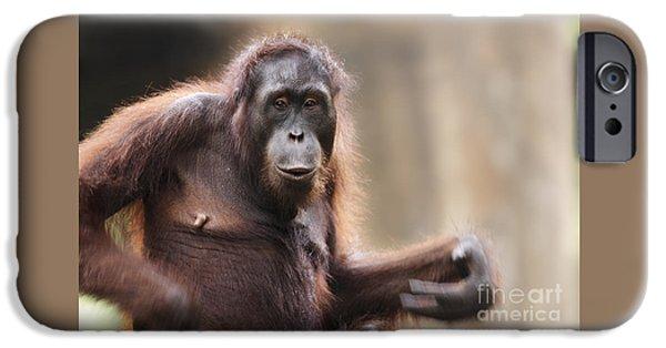 Orangutan IPhone 6s Case by Richard Garvey-Williams