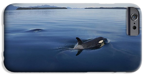 Orca Pair Surfacing Prince William IPhone Case by Hiroya Minakuchi