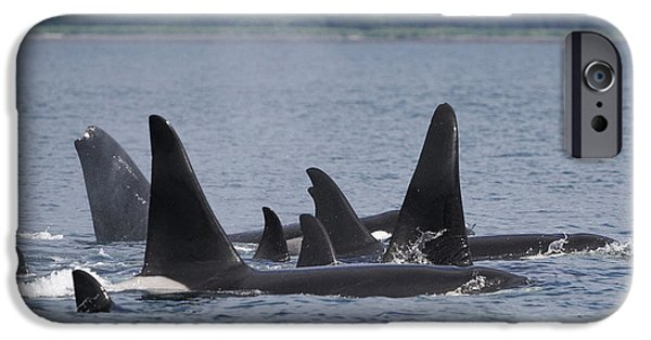 Orca Pod Surfacing Prince William Sound IPhone Case by Hiroya Minakuchi