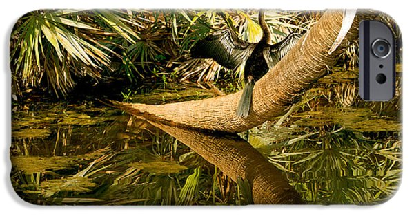 Oriental Darter Anhinga Melanogaster IPhone 6s Case by Panoramic Images