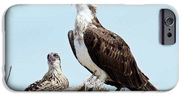 Osprey And Chick IPhone 6s Case by Bob Gibbons