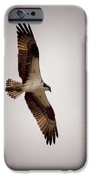 Osprey IPhone 6s Case by Ernie Echols