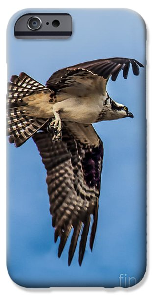 Osprey Flying Away IPhone Case by Robert Bales