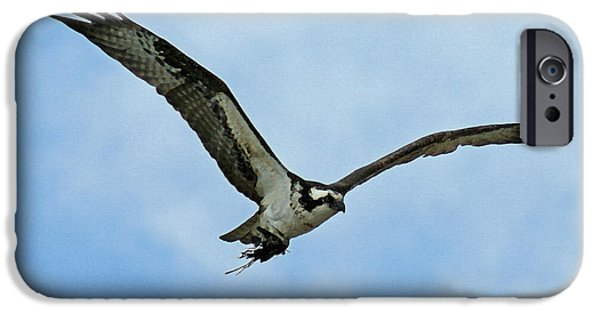 Osprey Nest Building IPhone 6s Case by Ernie Echols
