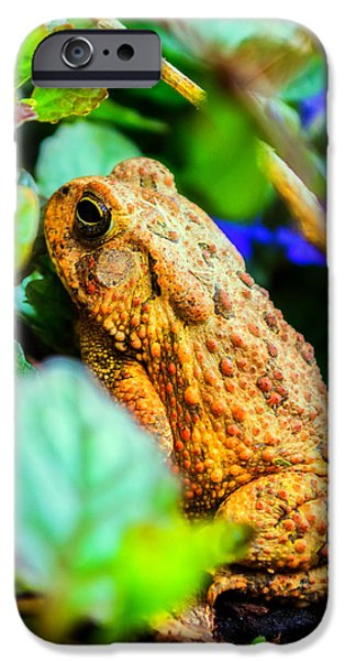 Our Backyard Visitor IPhone Case by Jon Woodhams