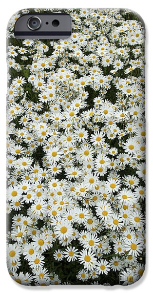 Oxeye Daises IPhone Case by Tim Gainey