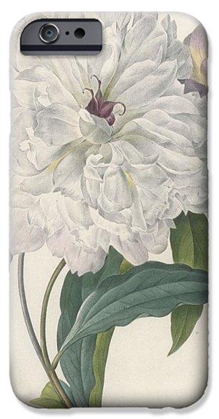 Paeonia Flagrans Peony IPhone Case by Pierre Joseph Redoute
