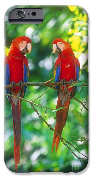 Pair Of Scarlet Macaws IPhone 6s Case by Art Wolfe