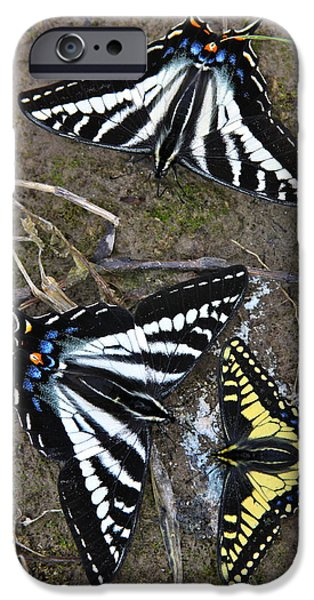 Pale Swallowtails And Western Tiger Swallowtail Butterflies IPhone Case by Karon Melillo DeVega