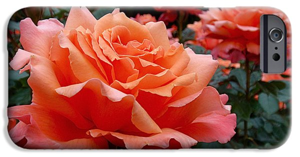 Peach Roses IPhone 6s Case by Rona Black