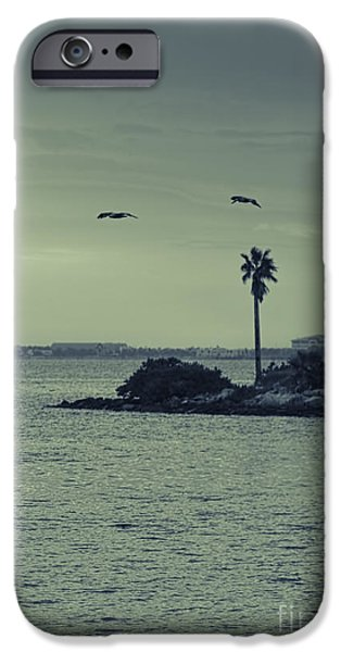 Pelicants And Palm IPhone Case by Marvin Spates
