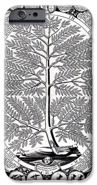 Peruvian Bark Or Jesuit Tree IPhone Case by Unknown