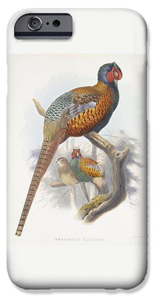 Phasianus Elegans Elegant Pheasant IPhone 6s Case by Daniel Girard Elliot