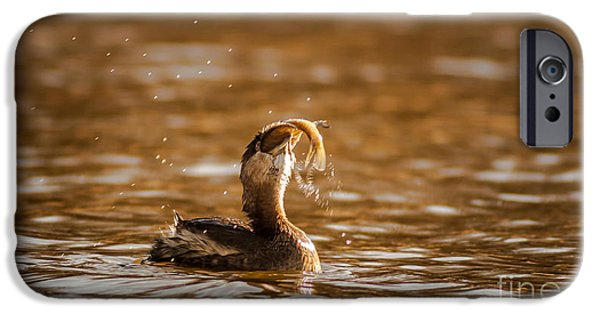 Pied-billed Grebe With Brim IPhone Case by Robert Frederick