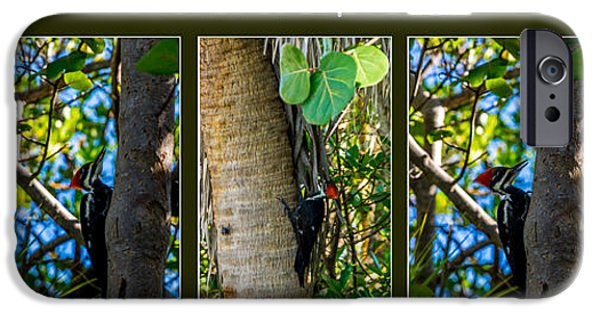 Pileated Woodpecker IPhone Case by Nancy L Marshall