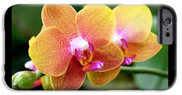 Pink Yellow Orchid IPhone Case by Rona Black