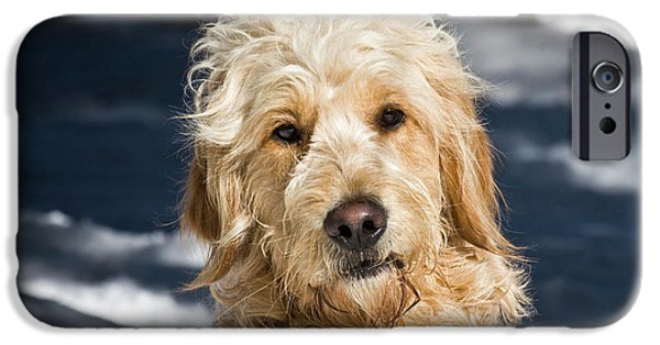 Portrait Of A Goldendoodle Sitting IPhone Case by Zandria Muench Beraldo