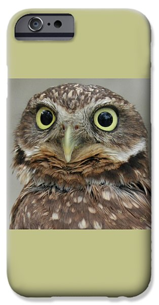 Portrait Of Burrowing Owl IPhone Case by Ben and Raisa Gertsberg