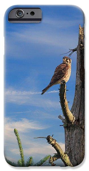 Portrait Of The American Kestrel IPhone Case by Bill Wakeley