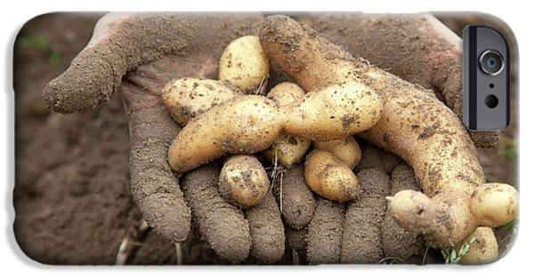 Potato Harvest IPhone 6s Case by Jim West