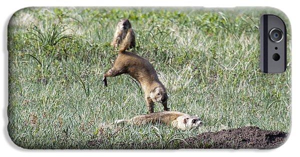 Prairie Dog Ferret Fight IPhone Case by Sandy Nervig