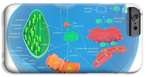 Protein Targeting In Cells IPhone Case by Science Photo Library