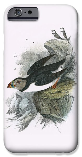 Puffin IPhone 6s Case by English School