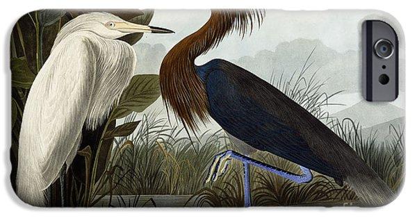 Purple Heron IPhone 6s Case by John James Audubon