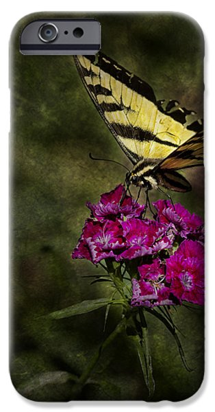 Ragged Wings IPhone Case by Belinda Greb