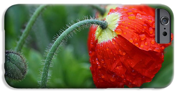 Rainy Day Series - Two Red Poppies IPhone Case by Suzanne Gaff