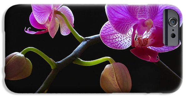 Rare Beauty IPhone 6s Case by Juergen Roth